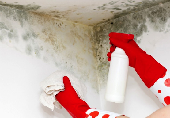 The dangers of DIY mould removal