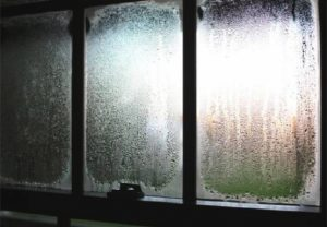 How do you prevent the growth of mould in your home?